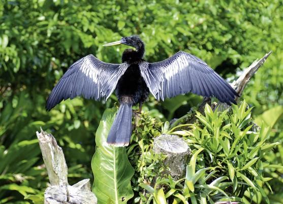 Costa Rica Rundreise: Ein einzigartiges Naturspektakel