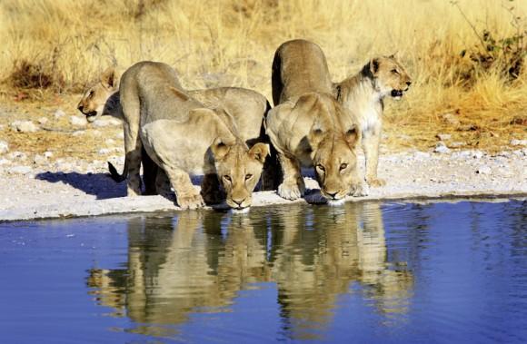 Hotel Namibia Rundreise: Rund um die Natur, Namibia / Windhoek