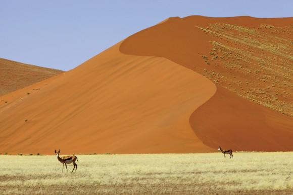Namibia Rundreise: Rund um die Natur
